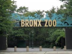 Бронксский зоопарк (Bronx Zoo)