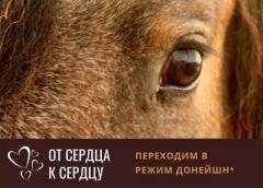 ОТ СЕРДЦА К СЕРДЦУ - ЕЖЕДНЕВНЫЕ ПРАКТИКИ В ТАБУНЕ | КРАСНОЯРСК